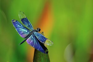 blue dragonfly myu myu